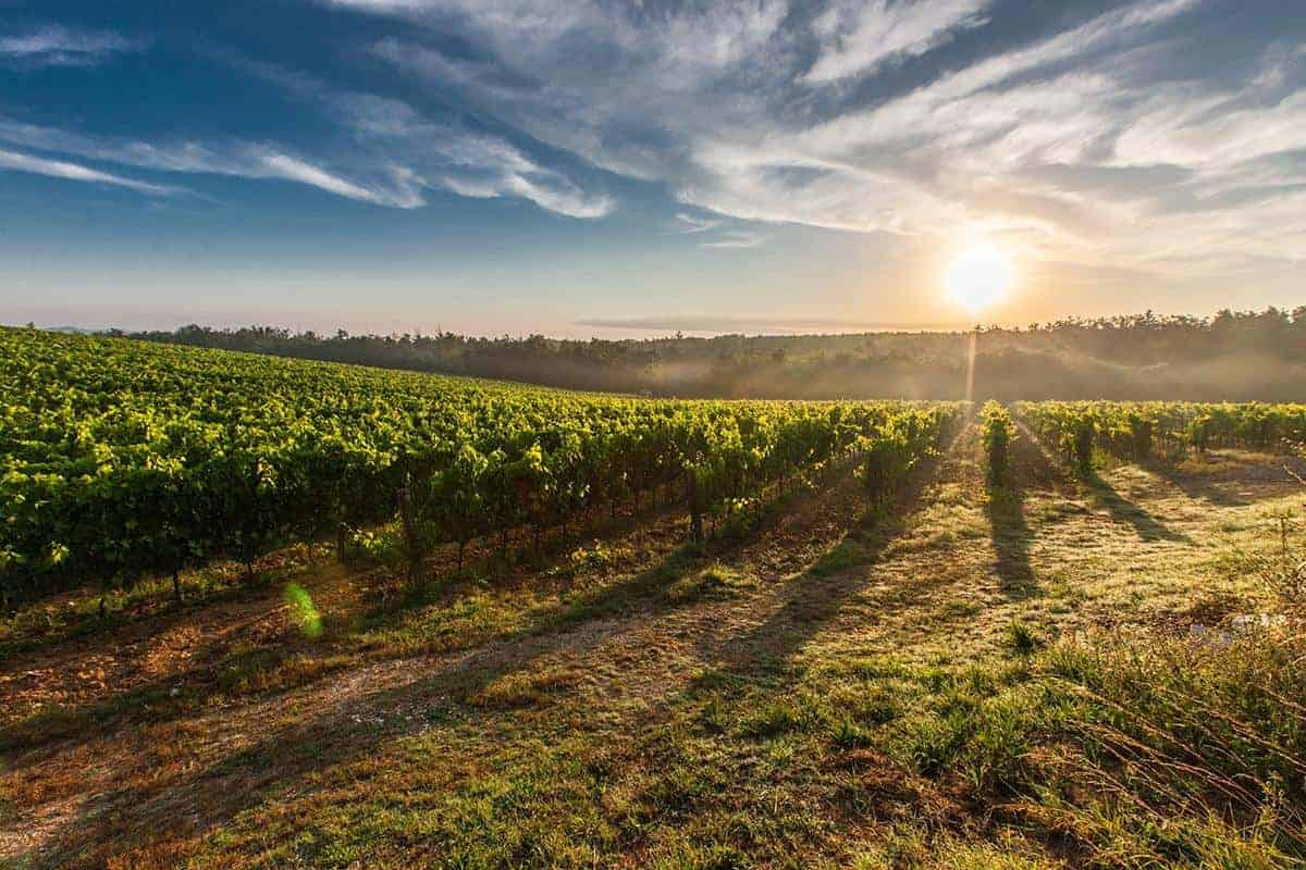 Our Top 10 Wine Brands in 2020