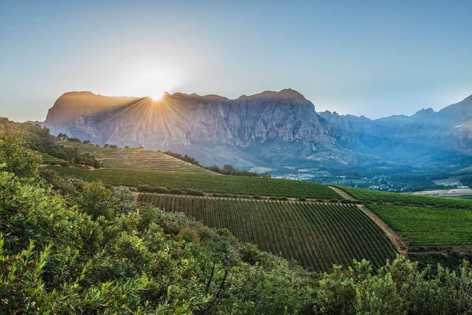 Thelema Mountain Vineyards Wine